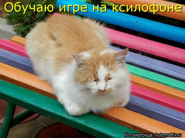 Котоматрица: Обучаю игре на ксилофоне