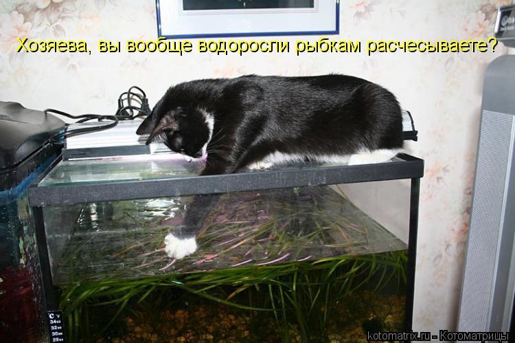 Котоматрица: Хозяева, вы вообще водоросли рыбкам расчесываете?