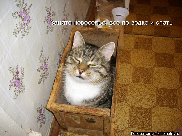 http://kotomatrix.ru/images/lolz/2012/12/02/kotomatritsa_aF.jpg