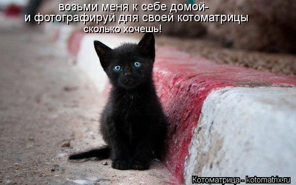 Котоматрица: возьми меня к себе домой- и фотографируй для своей котоматрицы  сколько хочешь!