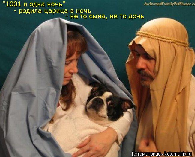"""Котоматрица: """"1001 и одна ночь"""" """"1001 и одна ночь"""" - родила царица в ночь - не то сына, не то дочь"""