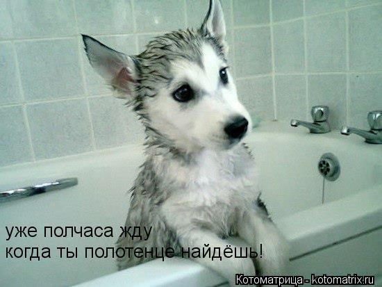 Котоматрица: уже полчаса жду когда ты полотенце найдёшь!