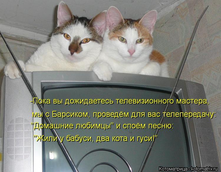 """Котоматрица: мы с Барсиком, проведём для вас телепередачу: """"Домашние любимцы"""" и споём песню: """"Жили у бабуси, два кота и гуси!"""" -Пока вы дожидаетесь телевизи"""