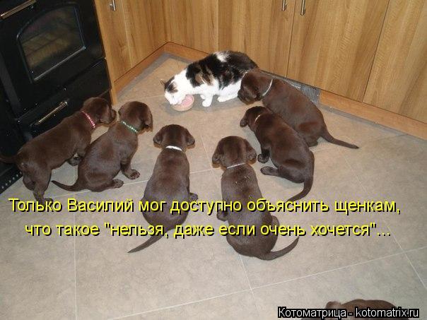 """Котоматрица: Только Василий мог доступно объяснить щенкам, что такое """"нельзя, даже если очень хочется""""..."""