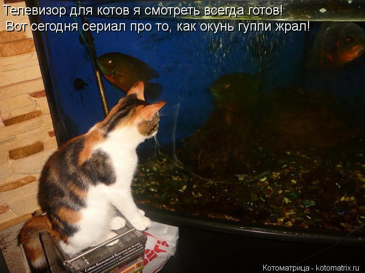 Котоматрица: Телевизор для котов я смотреть всегда готов! Вот сегодня сериал про то, как окунь гуппи жрал!
