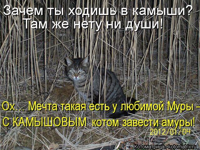 Котоматрица: Зачем ты ходишь в камыши?  Там же нету ни души! Ох… Мечта такая есть у любимой Муры – С КАМЫШОВЫМ  котом завести амуры!