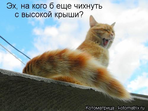 Котоматрица: Эх, на кого б еще чихнуть с высокой крыши?