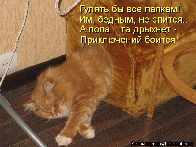 Котоматрица: Гулять бы все лапкам! Им, бедным, не спится.. А попа... та дрыхнет - Приключений боится!