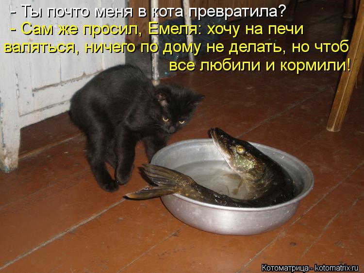 Котоматрица: - Ты почто меня в кота превратила? - Сам же просил, Емеля: хочу на печи валяться, ничего по дому не делать, но чтоб все любили и кормили!