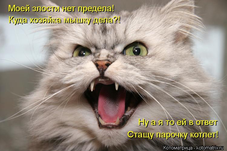 Котоматрица: Моей злости нет предела! Куда хозяйка мышку дела?! Ну а я то ей в ответ Стащу парочку котлет!