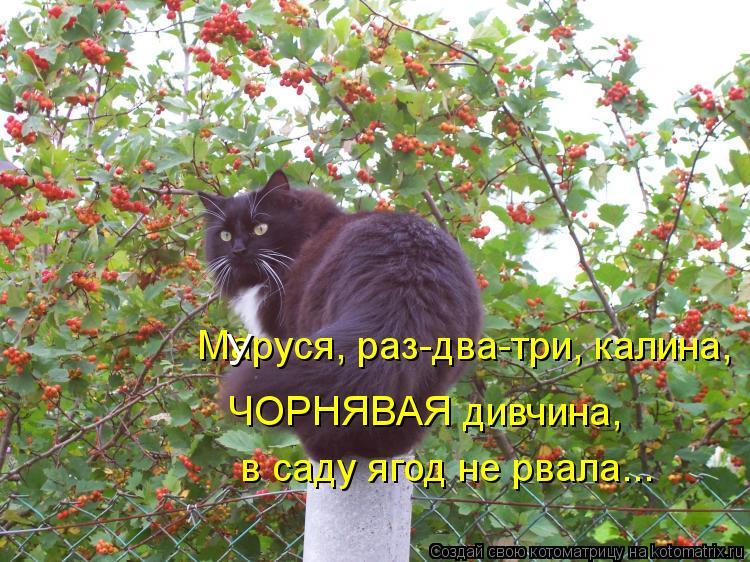 Котоматрица: Маруся, раз-два-три, калина, У ЧОРНЯВАЯ дивчина, в саду ягод не рвала...