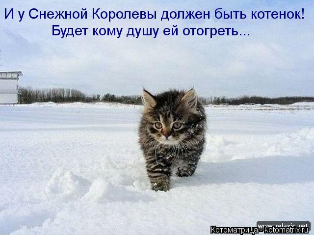Котоматрица: И у Снежной Королевы должен быть котенок! Будет кому душу ей отогреть...