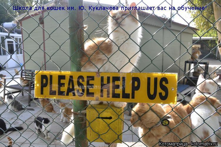Котоматрица: Школа для кошек им. Ю. Куклачева приглашает вас на обучение!