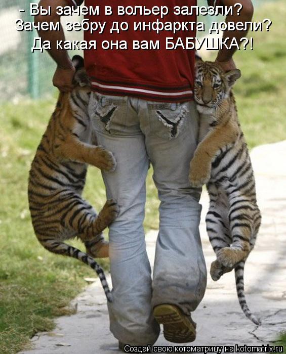 Котоматрица: - Вы зачем в вольер залезли? Зачем зебру до инфаркта довели? Да какая она вам БАБУШКА?!
