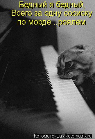 Котоматрица: Бедный я бедный, Всего за одну сосиску по морде...роялем