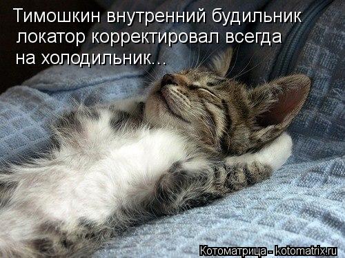 Котоматрица: Тимошкин внутренний будильник локатор корректировал всегда на холодильник...