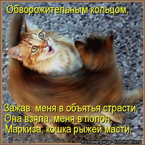 Котоматрица: Обворожительным кольцом,  Зажав  меня в объятья страсти. Она взяла, меня в полон, Маркиза, кошка рыжей масти.