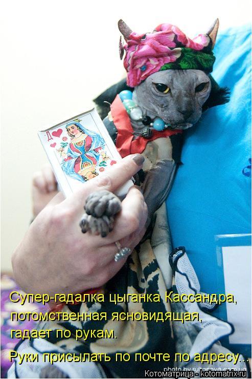 Котоматрица: Супер-гадалка цыганка Кассандра, потомственная ясновидящая, гадает по рукам. Руки присылать по почте по адресу...