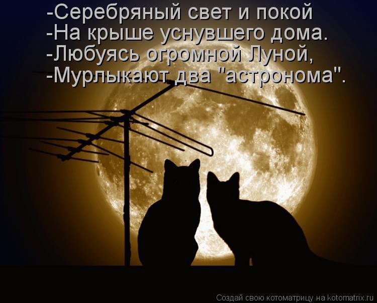 """Котоматрица: -Серебряный свет и покой  -На крыше уснувшего дома.  -Любуясь огромной Луной,  -Мурлыкают два """"астронома""""."""