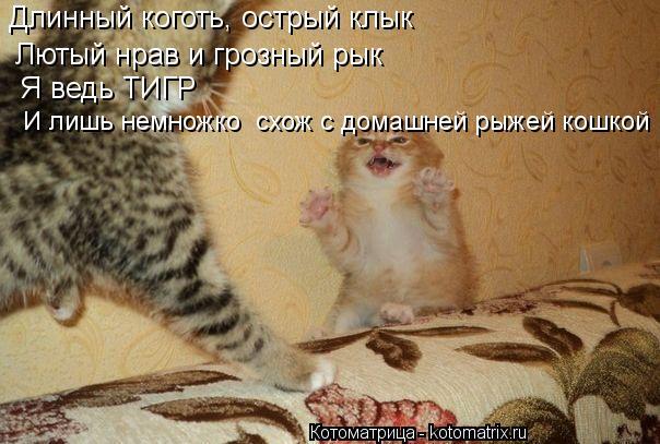 Котоматрица: Длинный коготь, острый клык Лютый нрав и грозный рык Я ведь ТИГР И лишь немножко  схож с домашней рыжей кошкой