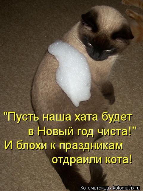 """Котоматрица: """"Пусть наша хата будет в Новый год чиста!"""" И блохи к праздникам отдраили кота!"""