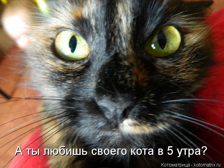 Котоматрица: А ты любишь своего кота в 5 утра?
