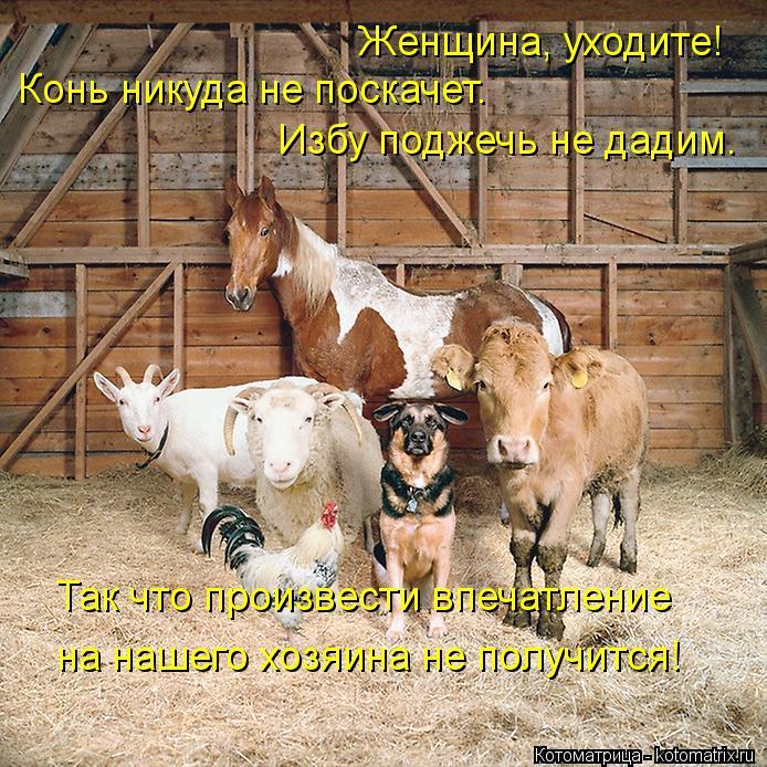 Котоматрица: Женщина, уходите! Конь никуда не поскачет. Избу поджечь не дадим. Так что произвести впечатление  на нашего хозяина не получится!