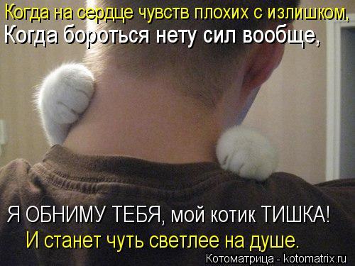 Котоматрица: Когда бороться нету сил вообще, Я ОБНИМУ ТЕБЯ, мой котик ТИШКА! И станет чуть светлее на душе. Когда на сердце чувств плохих с излишком,