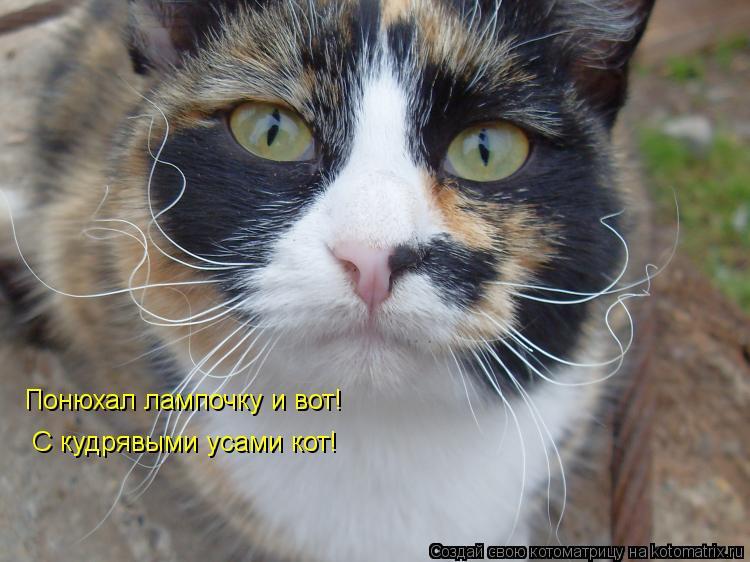 Котоматрица: Понюхал лампочку и вот! С кудрявыми усами кот!