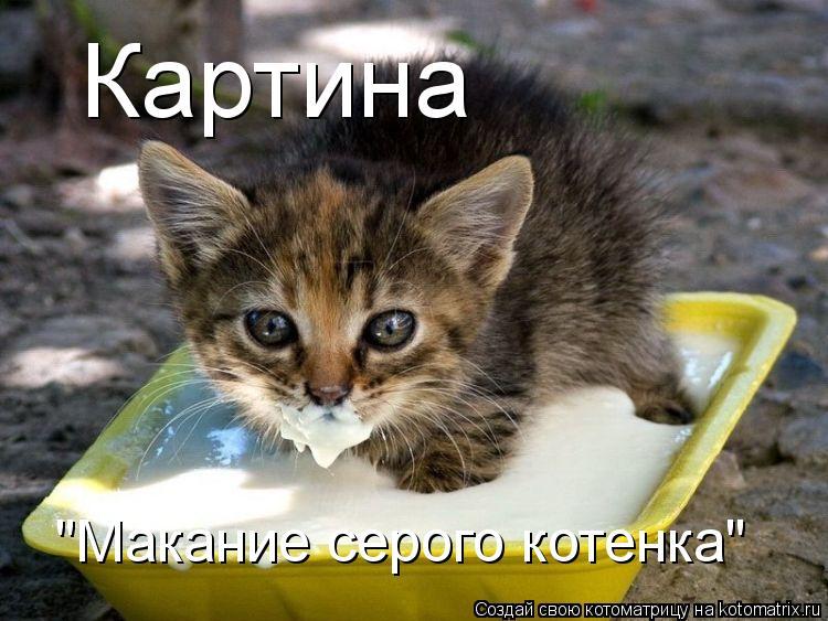 """Котоматрица: Картина  """"Макание серого котенка"""""""