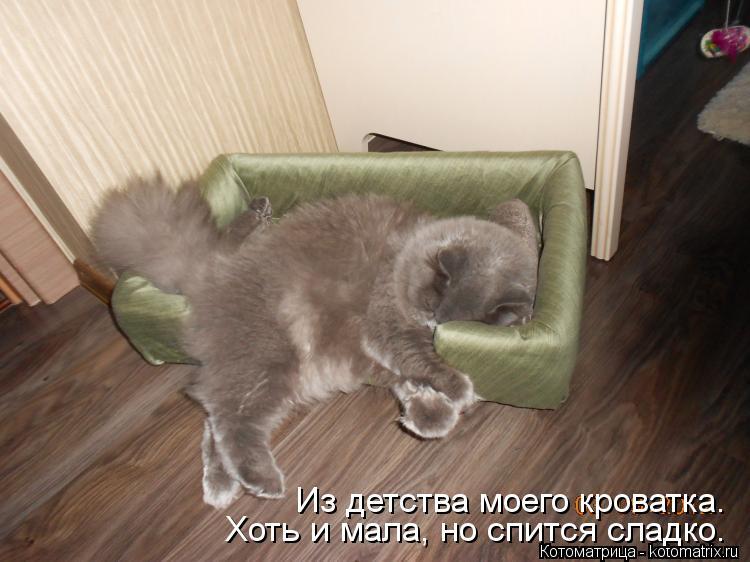 Котоматрица: Из детства моего кроватка. Хоть и мала, но спится сладко.