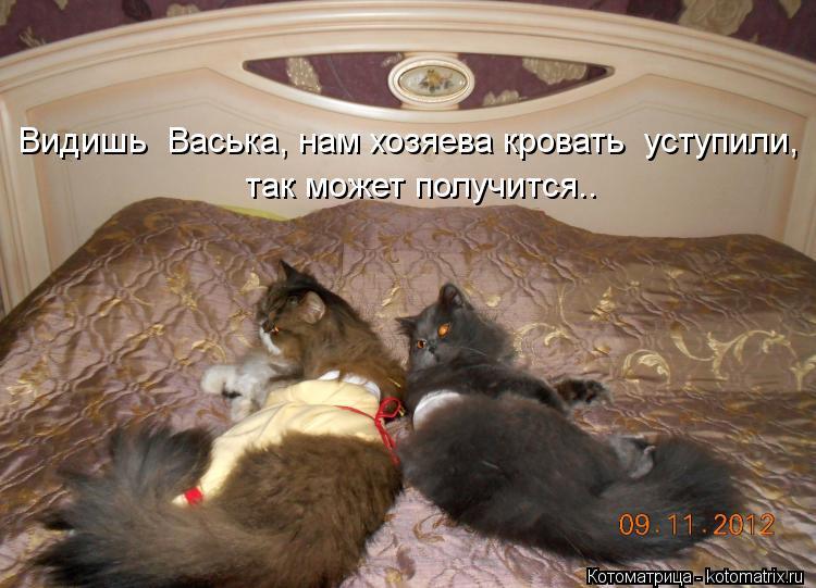 Котоматрица: Видишь  Васька, нам хозяева кровать  уступили,  так может получится..