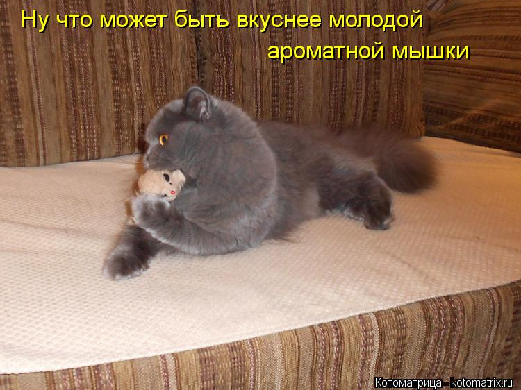 Котоматрица: Ну что может быть вкуснее молодой  ароматной мышки