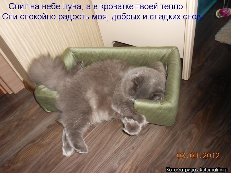 Котоматрица: Спит на небе луна, а в кроватке твоей тепло.  Спи спокойно радость моя, добрых и сладких снов!