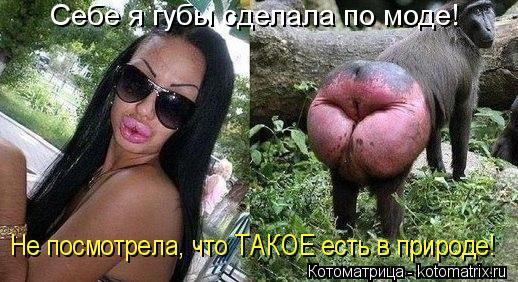 Котоматрица: Себе я губы сделала по моде! Не посмотрела, что ТАКОЕ есть в природе!