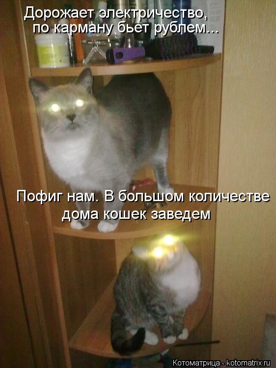 Котоматрица: Дорожает электричество,   по карману бьет рублем...  Пофиг нам. В большом количестве  дома кошек заведем