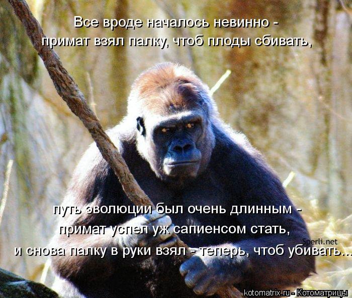 Котоматрица: Все вроде началось невинно -  примат взял палку, чтоб плоды сбивать, и снова палку в руки взял - теперь, чтоб убивать... путь эволюции был очень