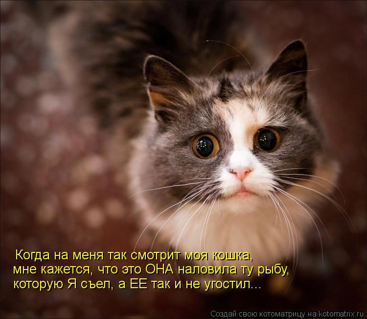 Котоматрица: Когда на меня так смотрит моя кошка, которую Я съел, а ЕЕ так и не угостил... мне кажется, что это ОНА наловила ту рыбу,