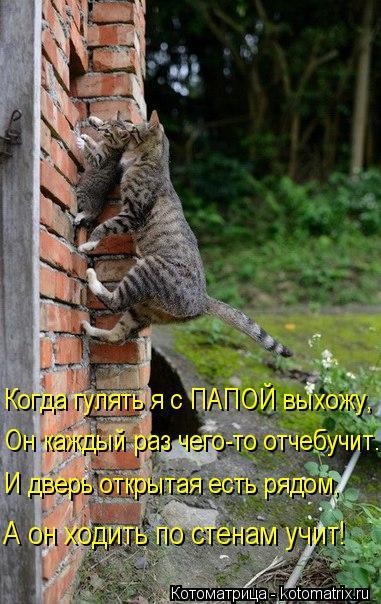 Котоматрица: Когда гулять я с ПАПОЙ выхожу, Он каждый раз чего-то отчебучит. И дверь открытая есть рядом, А он ходить по стенам учит!