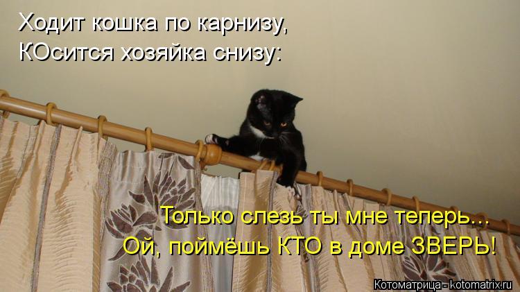 Котоматрица: Ходит кошка по карнизу, КОсится хозяйка снизу: Только слезь ты мне теперь... Ой, поймёшь КТО в доме ЗВЕРЬ!