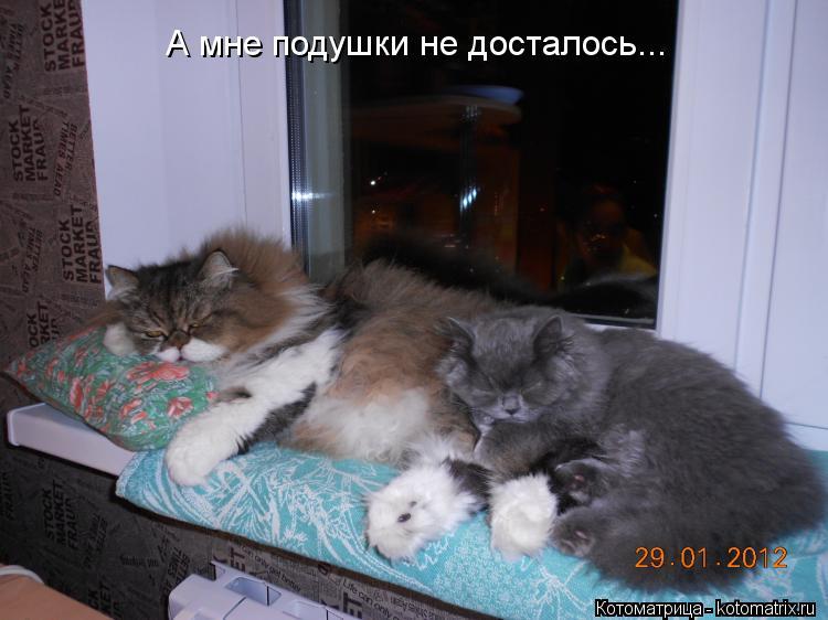 Котоматрица: А мне подушки не досталось...