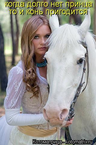Котоматрица: когда долго нет принца  то и конь пригодится
