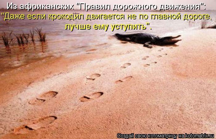 """Котоматрица: """"Даже если крокодил двигается не по главной дороге,  Из африканских """"Правил дорожного движения"""": лучше ему уступить""""."""
