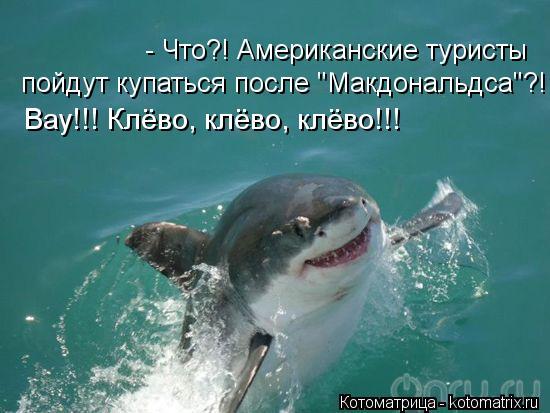 """Котоматрица: - Что?! Американские туристы  пойдут купаться после """"Макдональдса""""?! Вау!!! Клёво, клёво, клёво!!!"""