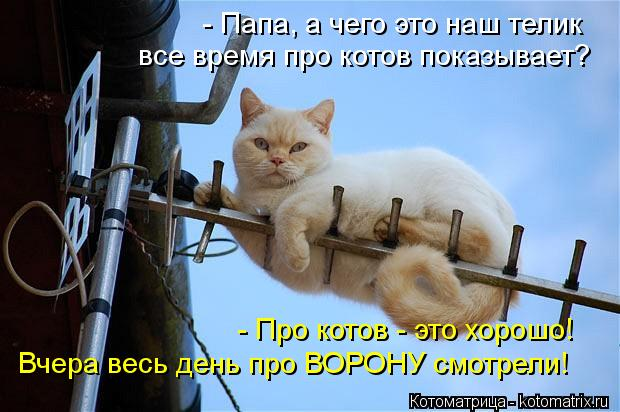 Котоматрица: - Папа, а чего это наш телик все время про котов показывает? - Про котов - это хорошо! Вчера весь день про ВОРОНУ смотрели!