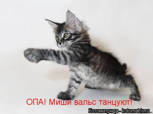 Котоматрица: ОПА! Миши вальс танцуют!