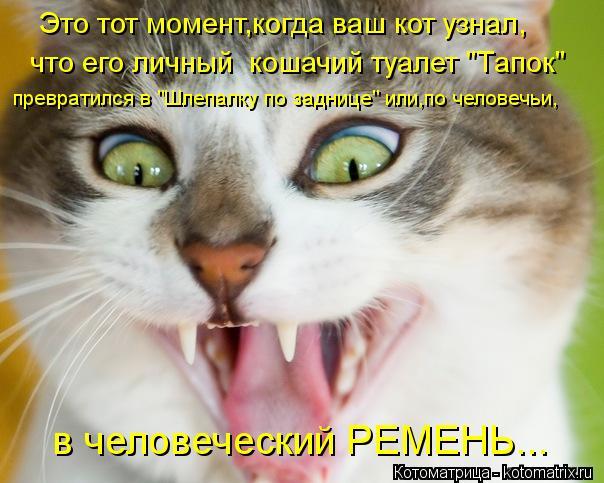 """Котоматрица: Это тот момент,когда ваш кот узнал, что его личный  кошачий туалет """"Тапок"""" превратился в """"Шлепалку по заднице"""" или,по человечьи, в человечески"""