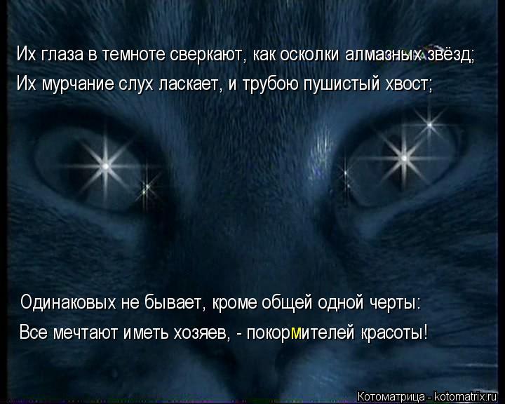 Котоматрица: Их глаза в темноте сверкают, как осколки алмазных звёзд; Их мурчание слух ласкает, и трубою пушистый хвост; Одинаковых не бывает, кроме обще