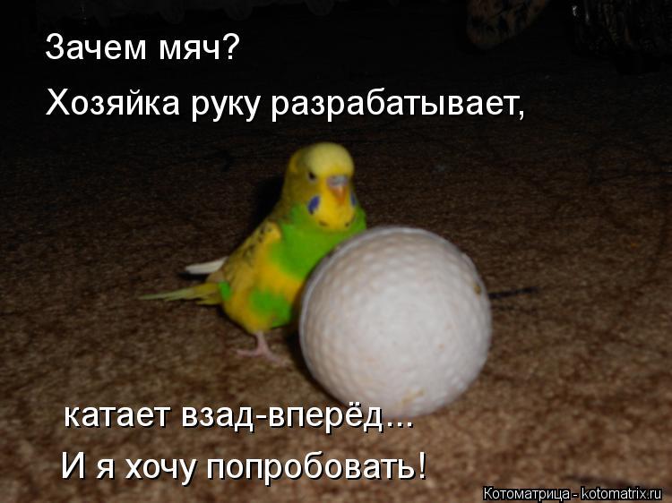 Котоматрица: Зачем мяч? Хозяйка руку разрабатывает, катает взад-вперёд... И я хочу попробовать!