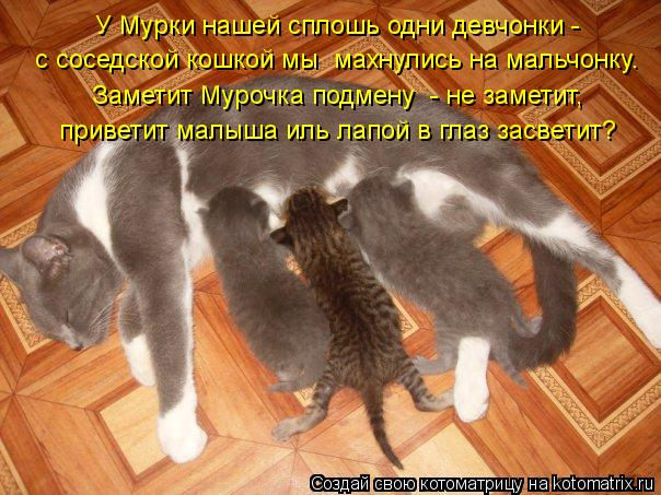 Котоматрица: У Мурки нашей сплошь одни девчонки -  с соседской кошкой мы  махнулись на мальчонку. Заметит Мурочка подмену  - не заметит, приветит малыша ил